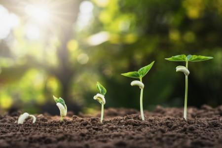 """Udržitelnost není jen slovo: EY chce do 2025 dosáhnout """"net zero"""" emisí"""