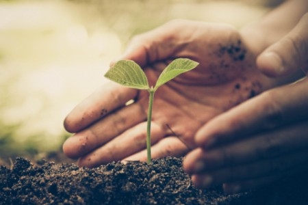 plant-growing-in-soil