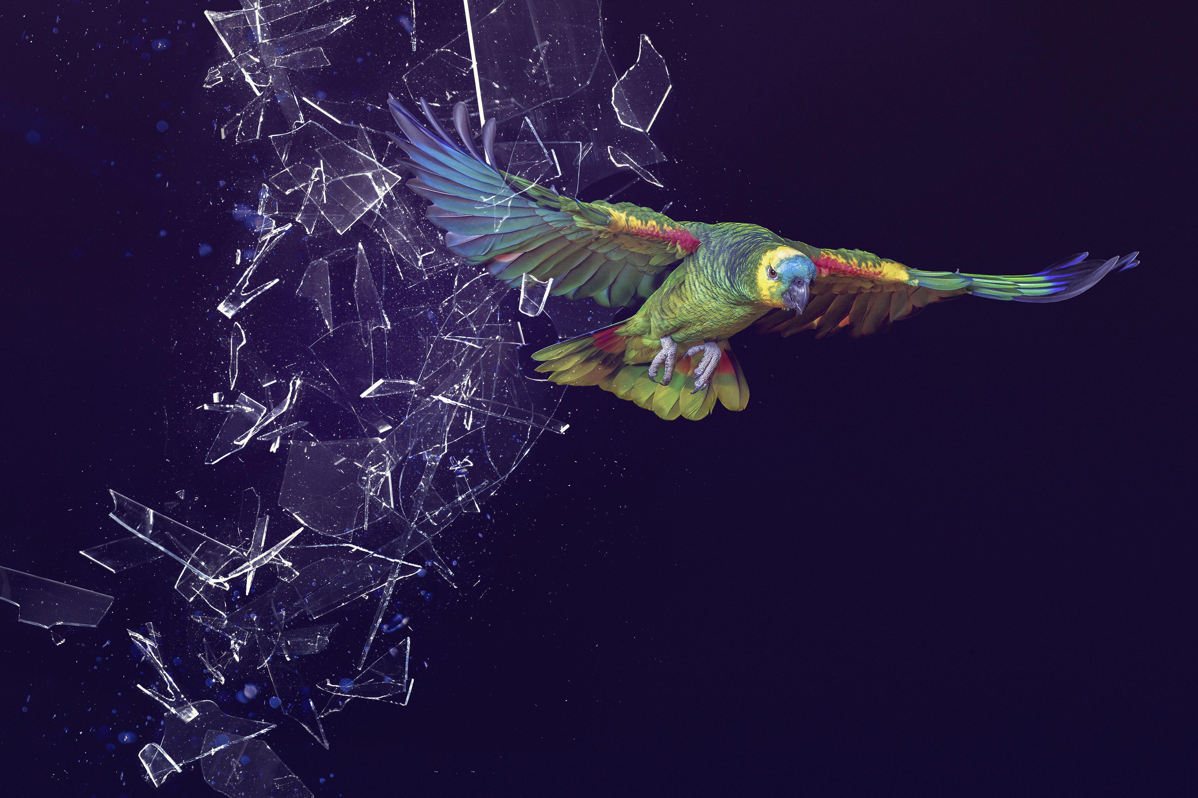 ey-eoy-2019-parrot.jpg