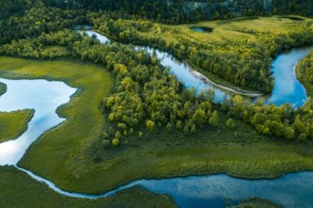 Fluss durch Wald