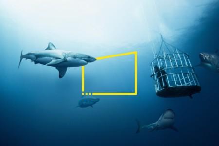 Haie und tauchender Mann unter Wasser