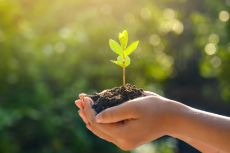 Neue Pflanze wächst in der Hand heran
