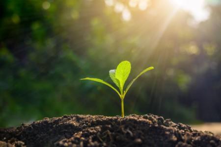 Pflanze wächst aus dem Boden