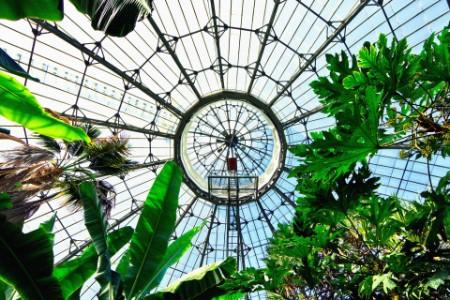 Planzen und Glaskuppel im Hintergrund aus Froschperspektive