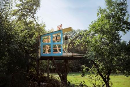 Mann auf einem Baum baut ein Baumhaus
