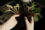 Person hält Pflanze mit Handschuhen