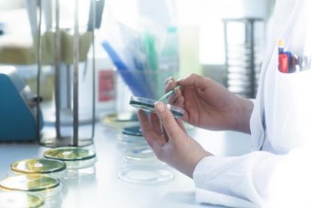 Laborantin untersucht Inhalt von Petrischale