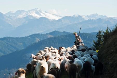 Schäfer mit Herde vor Bergkulisse