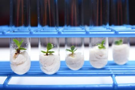 Nahaufnahme von kleinen Pflanzen im Reagenzglas