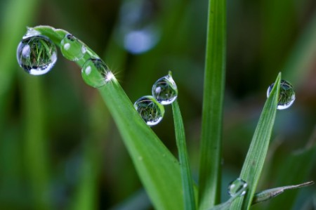 Droplets of water on grass