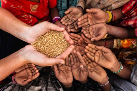 Hands reaching for grain