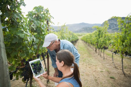 A photograph of people using technology in a vineyard