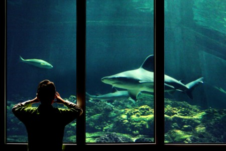EY – Un enfant qui regarde des requins dans un aquarium