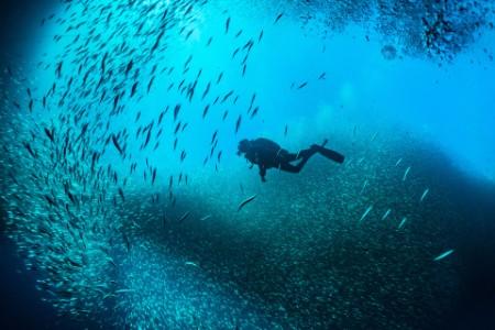 EY – Un plongeur en scaphandre autonome nage parmi des bancs de poissons