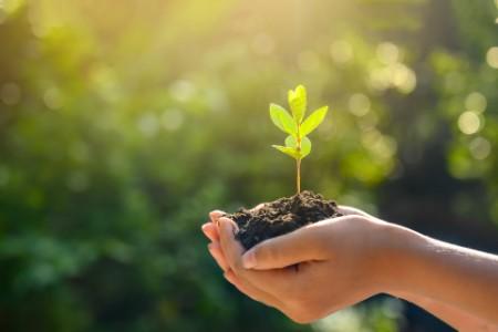 EY:n tavoitteena hiilinegatiivisuus vuoden 2021 loppuun mennessä