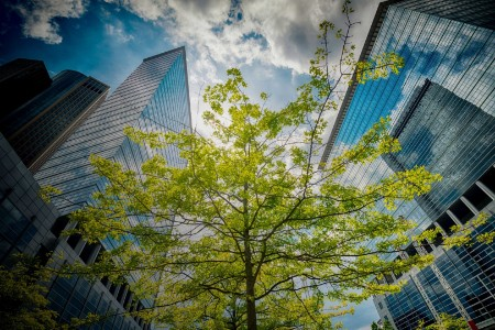 Trees between modern office building