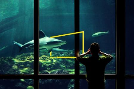 Niño observando tiburones en el acuario