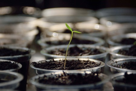 Single plan grow soil pot