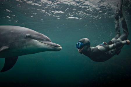 アイルランドでバンドウイルカと泳ぐフリーダイバーの女性