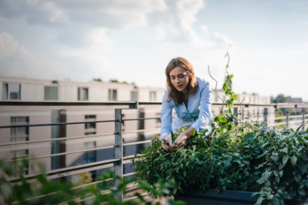 Businesswoman cultivating vegetables in his urban rooftop garden