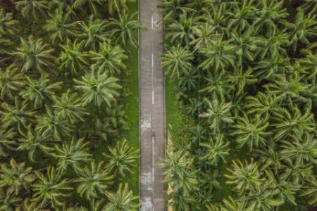 Drone point of view of palm trees and road in the Philippines