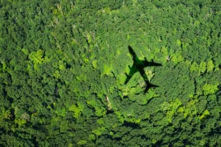 Тень самолета над лесом