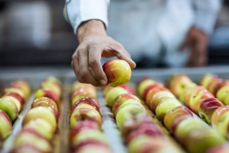 Worker taking apple from conveyor belt-in factory
