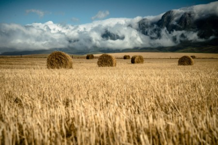 bales hay misty mountains field