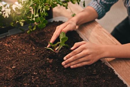 Boy Covering plant in soil
