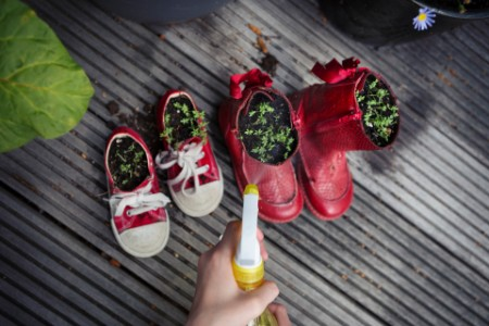 Spraying water onto cress plants in repurposed old shoes