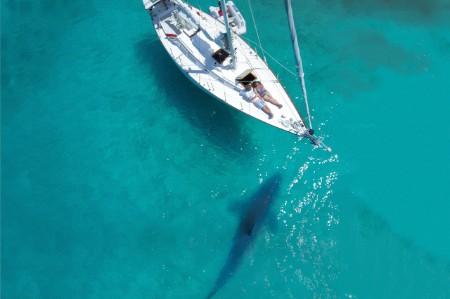 Couple sailboat Caribbean shark