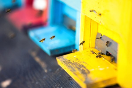Multicoloured beehives with flying bees