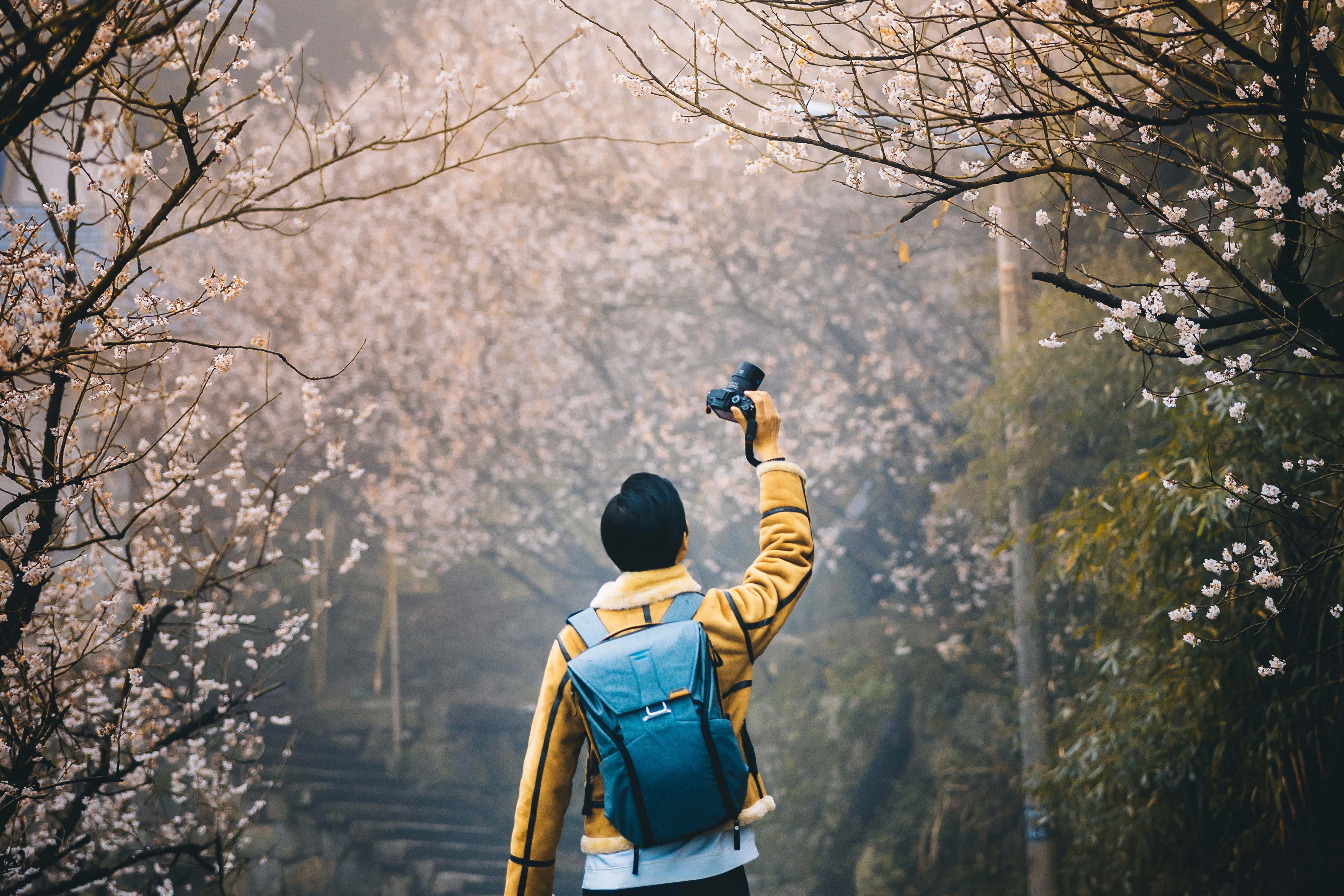 Man in yellow coat photographs cherry blossom