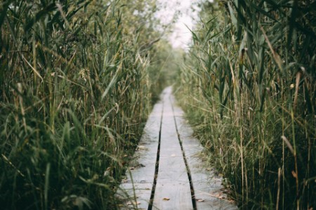 Boardwalk stretches off through the long grass