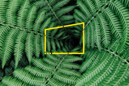 detail of a ring of fern fonds