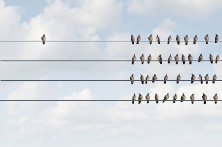 birds sitting telephone wires