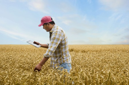 farmer tablet field