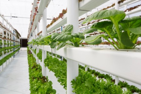 indoor farm hydroponics vertical farming