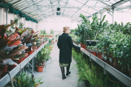 Woman inspects rows of plants in a greenhouse