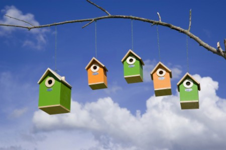 Bird houses hanging from branch