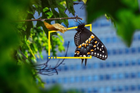 Butterfly hatches on a twig near an office block