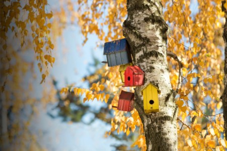 Colorful bird houses on tree trunk in forest