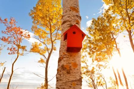 Red aviary, bird house