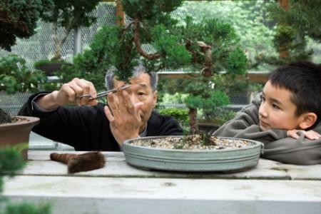 Senior asian man trimming bonsai with child