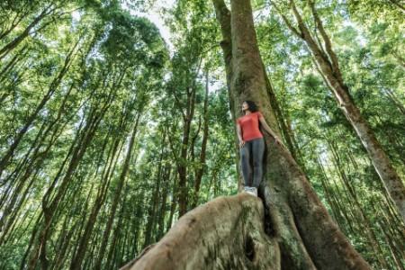 Mulher asiática numa floresta tropical