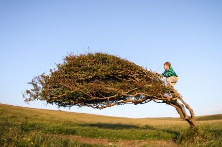 boy climbing windswept tree