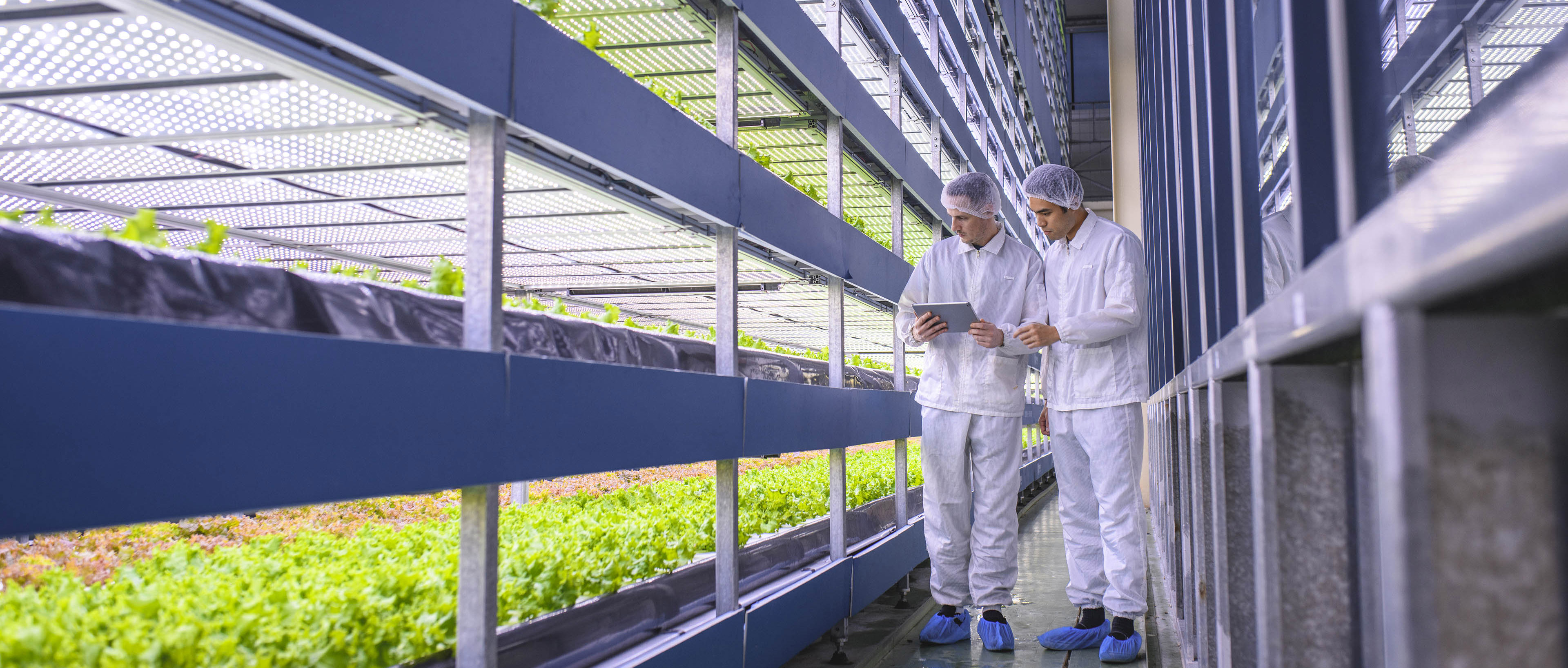 Agri-tech Specialists Examining Stacks of Indoor Crops