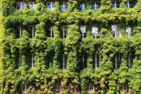 Facade building covered ivy