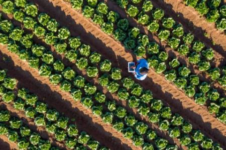 African female farmer using a digital tablet monitoring vegetables
