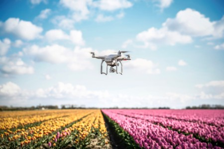 drone camera flying tulip fields